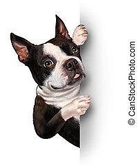 hund, hos, en, blank, card