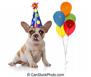 hund, hos, fødselsdag gilder, hat, og, balloner