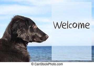 hund, hos, ocean, text, välkommen