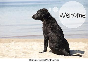 hund, hos, sandig badstrand, text, välkommen