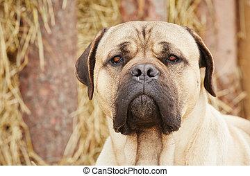 hund, in, der, bauernhof