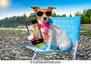 hund, in, hängmatta, på, sommar