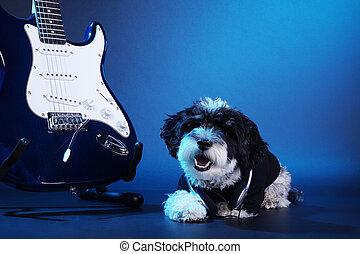 hund, in, studio, med, a, gitarr
