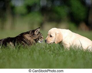 hund, kat
