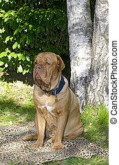 hund, kleingarten