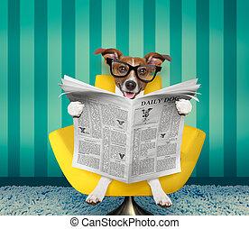 hund, läsande tidning, hemma