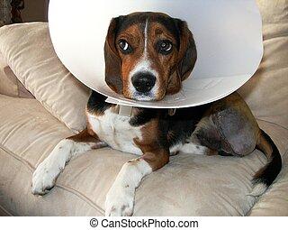 hund, lidande