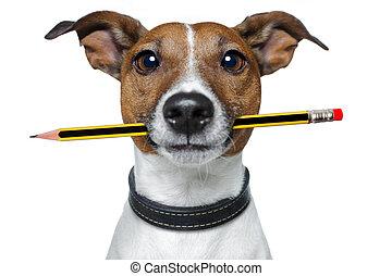 hund, med, blyertspenna, och, radergummi