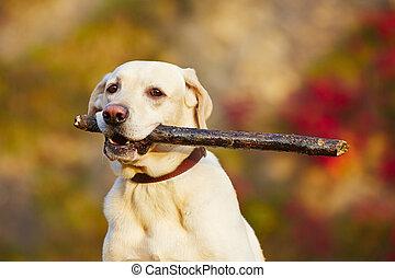 hund, med, käpp