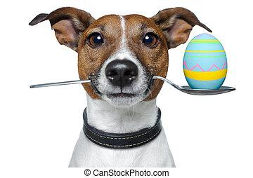 hund, med, sked, och, påsk egga
