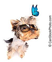 hund, med, solglasögoner, och blåa, fjäril