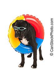hund, mit, schwimmender, spielzeug