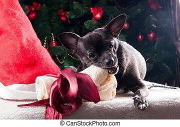 hund, mit, weihnachten, knochen, geschenk, mit, weihnachtsbaum