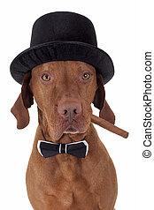 hund, mit, zigarre