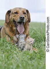 Hund mit zwei Kitten - Freundschaft zwischen einem Hund und...