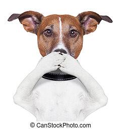 hund, mun, täcke