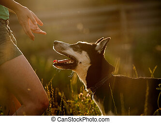 hund, obidient