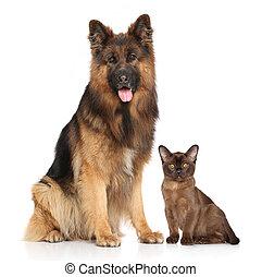 hund, och, katt, tillsammans