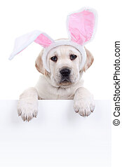 hund, Ostern, kaninchen, zeichen