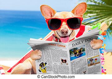 hund, på, hängmatta, in, sommar