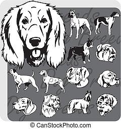 hund, rassen, -, vektor, satz