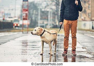 hund, regen, mann
