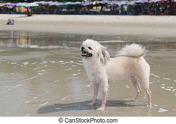 hund, reise, an, sandstrand