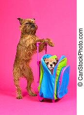 hund, reise, freigestellt