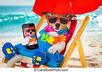 hund, siesta, på, stranden stolen