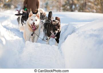 hund sled