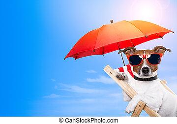 hund, solbada, på, en kortlek, stol, med, tomt utrymme, på,...