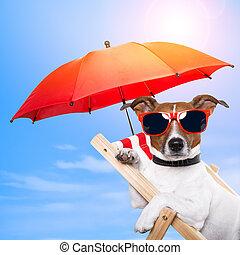 hund, solbada, på, en kortlek, stol