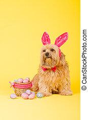 hund, som, påsk kanin