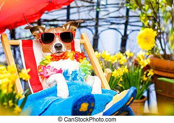 hund, sommer feiertag, urlaub, auf, hängemattte