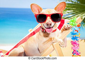 hund, sommer feiertag, urlaub
