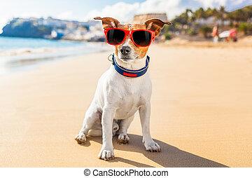 hund, sommer