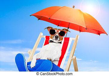 hund, sonnenbaden