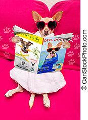 hund, spa, wohlfühlen, zeitschrift, lesende