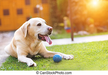 hund, spelande ute