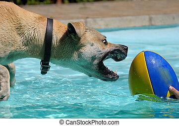 hund, spielende , mit, kugel