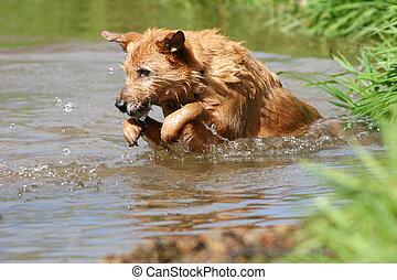 hund, springen, wasser