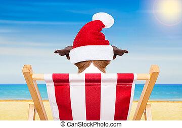 hund, stranden stolen, på, jul, lov