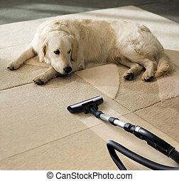 hund, teppich