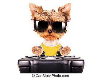 hund, tröttsam, a, solglasögoner, lek, på, leken vadderar