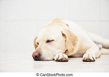 hund, traurige