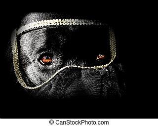 hund, turban