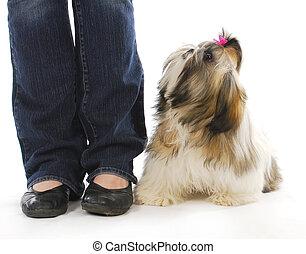 hund, und, eigentümer