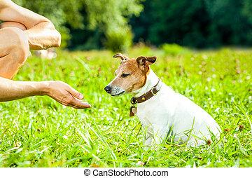 hund, und, eigentümer, training