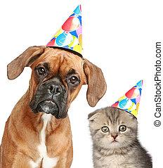 hund, und, katz, in, party, kappe, weiß, hintergrund