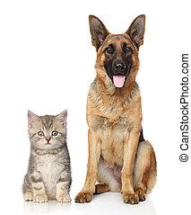 hund, und, katz, zusammen